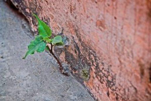 wall-1129939_1280