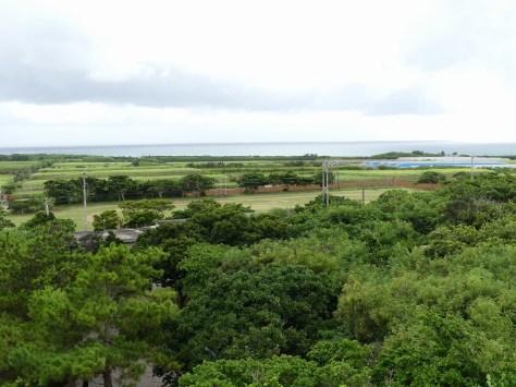 来間島展望台からの景色。さとうきび畑が広がる。