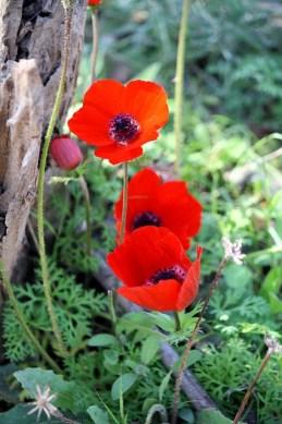 anemone-1206942_640
