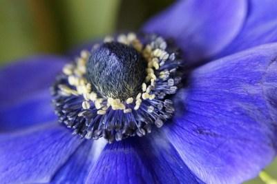 anemone-670362_640