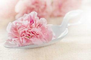 flower-1357109_6402