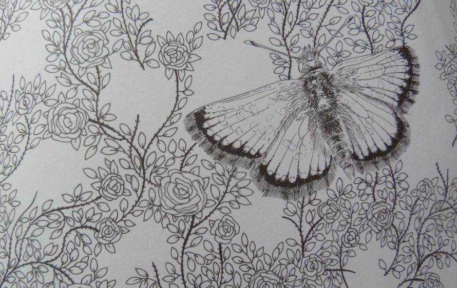 motyle1