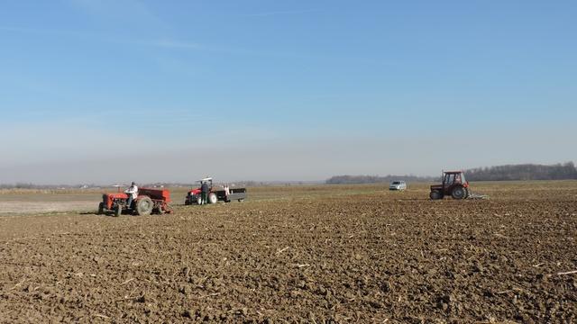 Nakon  berbe kukuruza završena i sjetva pšenice