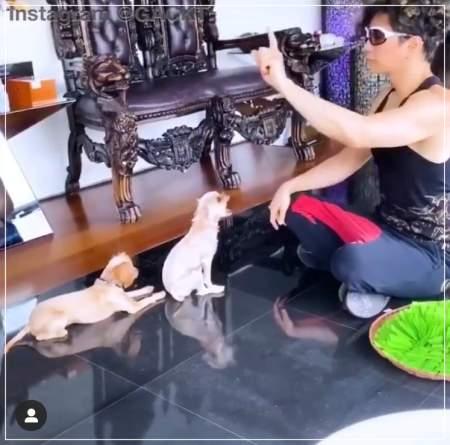 ガクトがクアラルンプールの自宅で愛犬に芸を教え込む姿