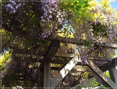福田萌子の埼玉の実家の庭の写真とツイートが凄い