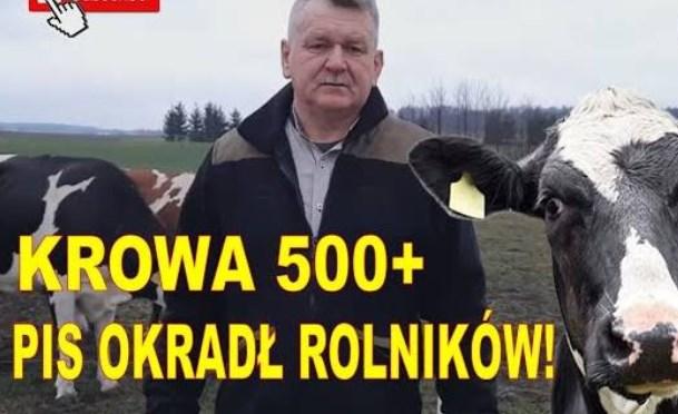 KROWA 500 + i partyjne jątrzenie. PiS-u rolna polityka – myk na naiwność rolnika