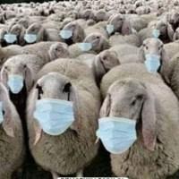 PRZEJĘCIE POLSKI PO PANDEMII – TAJEMNICA SPISU POWSZECHNEGO 2021.