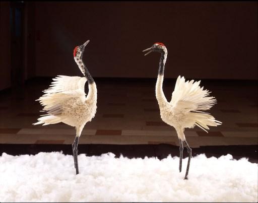 二匹の丹頂鶴の写真