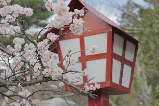 japan-955813_640.jpg