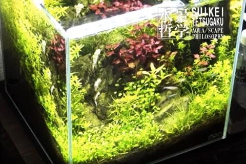 水槽レイアウトレシピ02|小型キューブ水槽の立ち上げ