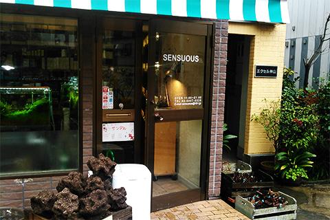 「大都会渋谷でグラスアクアリウムを作ろう!」