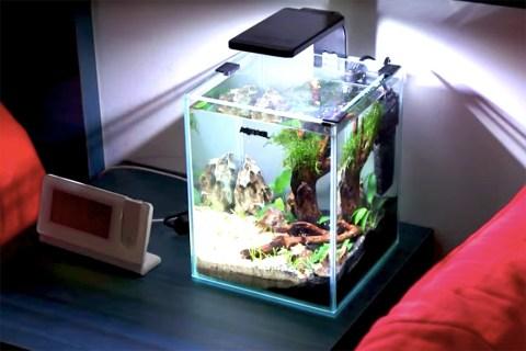 水槽レイアウトレシピ12|水草と流木の小型ベタ水槽をつくる