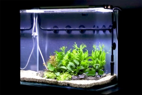 水槽レイアウトレシピ13|45cm水槽で風山石を使ったレイアウトをつくる