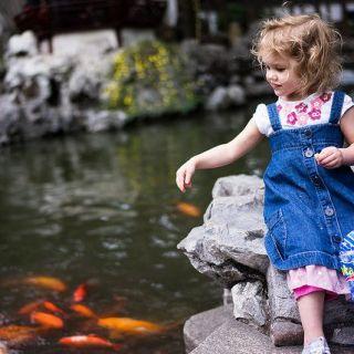 熱帯魚用のえさ、一体どんなものがあるの?