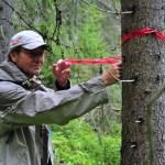 Avverkningshotad skog. Foto Hans Sundström.