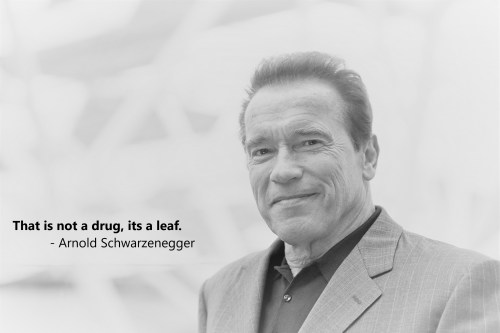 That is not a drug, its a leaf. - Arnold Schwarzenegger