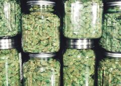 Why NOW Is Your Best Chance to Buy Pot Stocks
