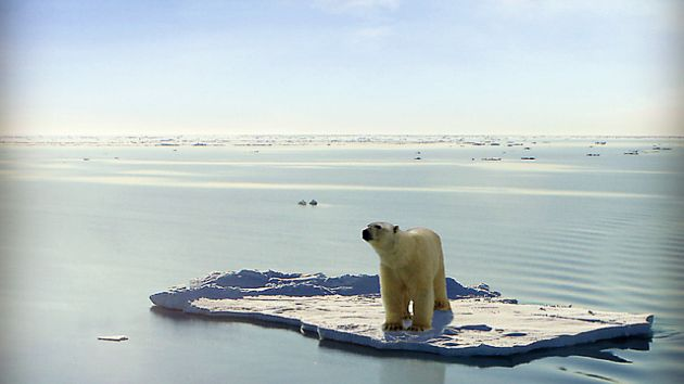 Polar bear on a remnant ice floe