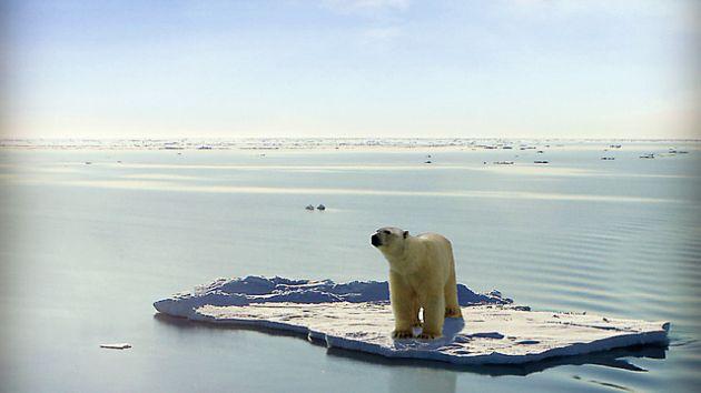 Polar bear on a remnant ice floe
