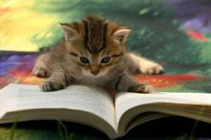BnYCFK2CYAAzmdn cat with book