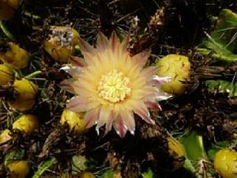cactus-213145__180