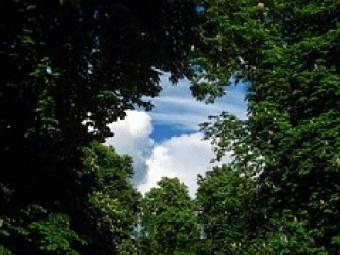 tree-220664__180