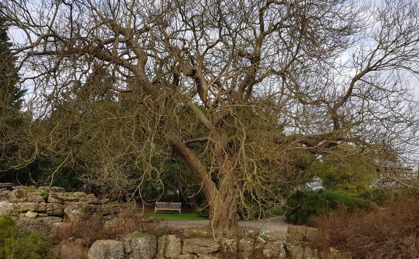 The Magic of Trees: Purpurea