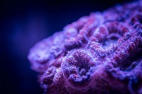 Hippie flavour acan photographed on moon lights