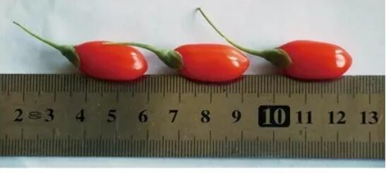 goji berries size