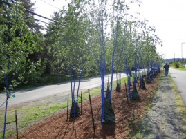Bothell blue tree forest