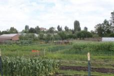 Marra Farm 2