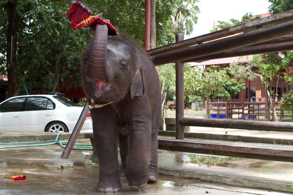 Elefanten-Kraal in Ayuthaya 25