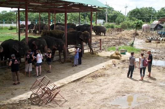 elefanten-kraal-ayuthaya-3