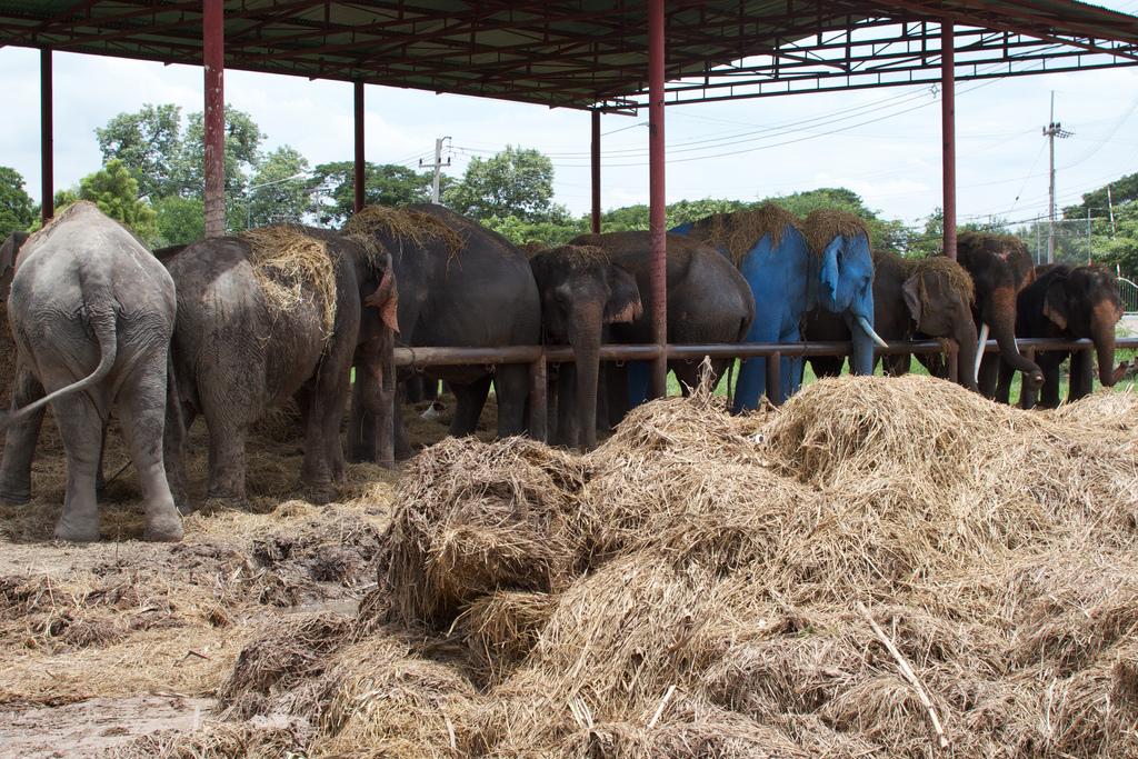Elefanten-Kraal in Ayuthaya 21
