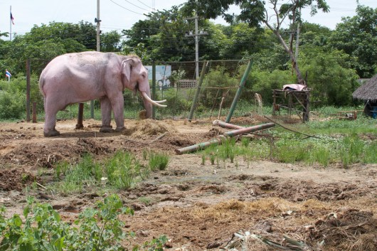 elefanten-kraal-ayuthaya-6
