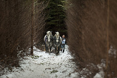 2013 horses 6