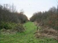 Little Linford Wood 2007
