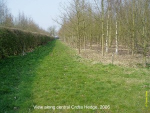 View along central Cross Hedge in Hazeley Wood