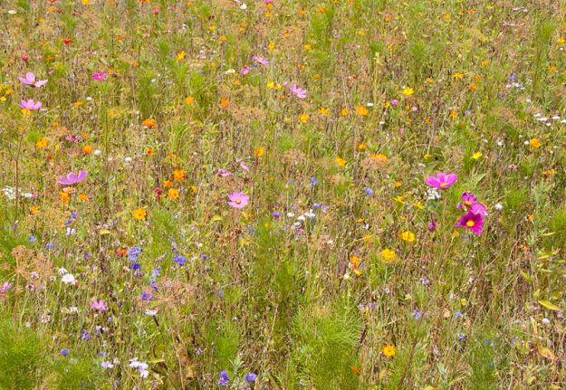 Meadow Flowers by Tony Hisgett. (CC BY 2.0)
