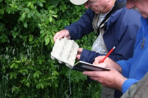 Linford Lakes NR BioBlitz by David Easton. 24 June 2016