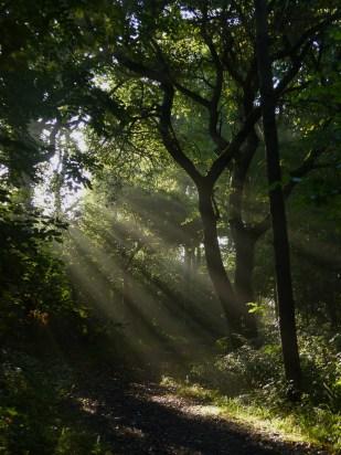 Morning sunlight in Howe Park Wood by Harry Appleyard 26 August 2016