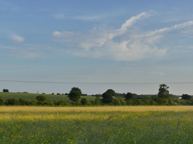 Meadow ©Harry Appleyard, Rushden Lakes 5 June 2018