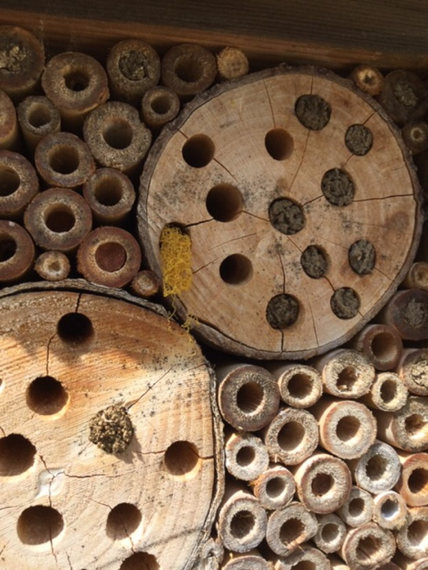 Interesting substance in bee hotel ©Julie Lane, Olney 3 July 2019