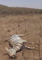 Mort des animaux en Afrique