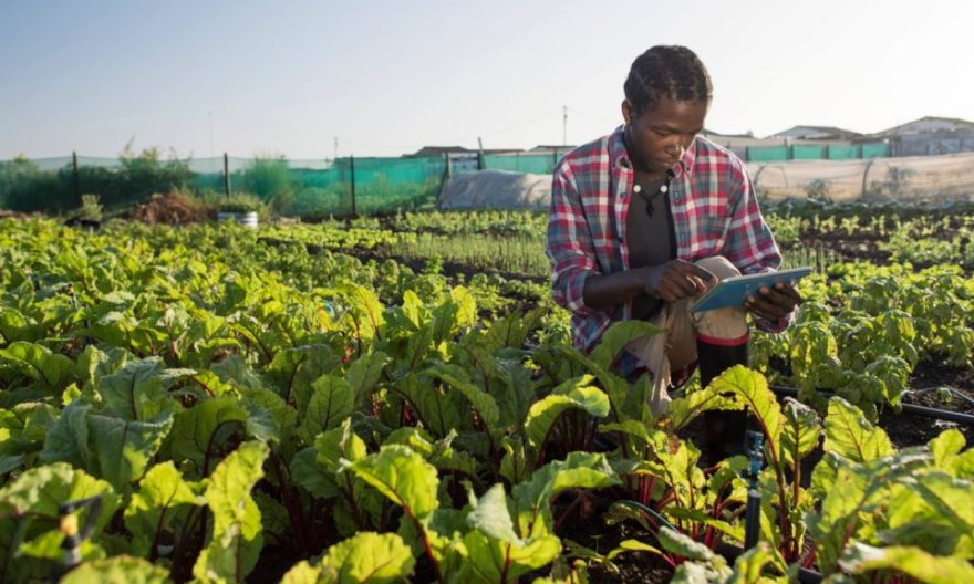 Kshs 500,000 in agribusiness funding up for grabs says ministry of agriculture