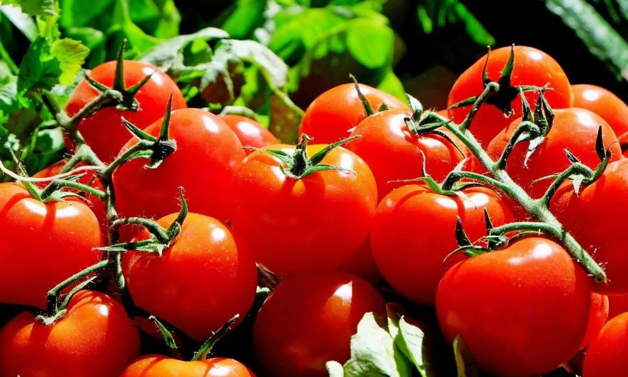 A farmer's secret guide to making big cash in tomatoes farming