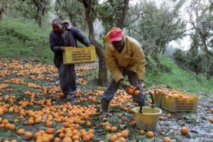 6 tips to retain good farmworkers mkulimatoday.com