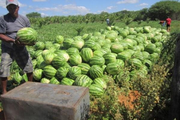 A LIST OF WATERMELON farming TIPS mkulimatoday.com
