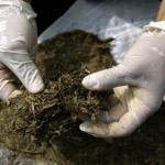 R.L. uhapšen zbog zasada marihuane na Bogetićima