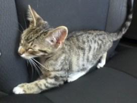 Meet Koufax0807121740b